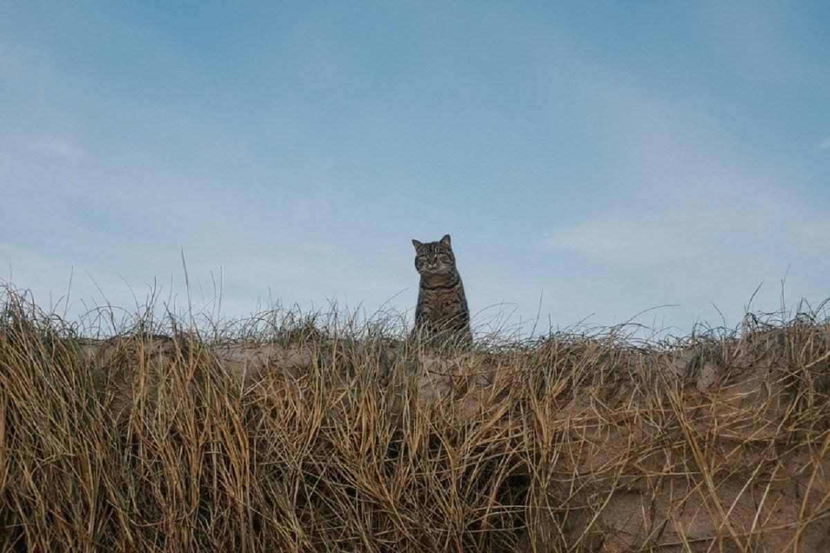cat at beach benbecula culla bay