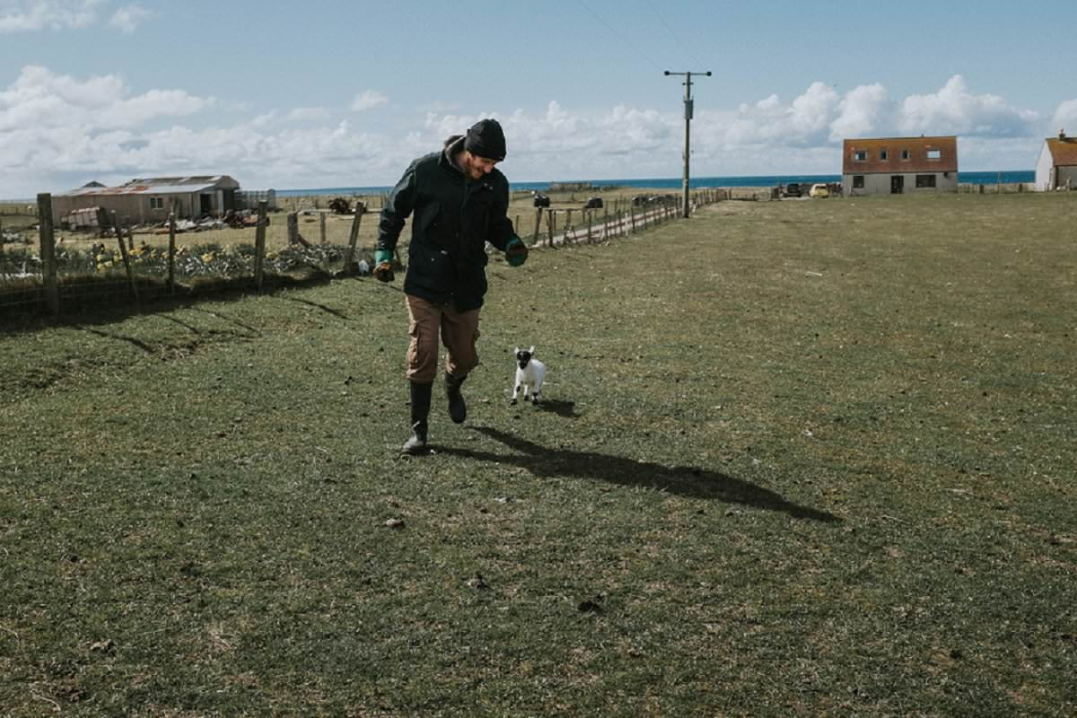 lamb chasing crofter benbecula outer hebrides