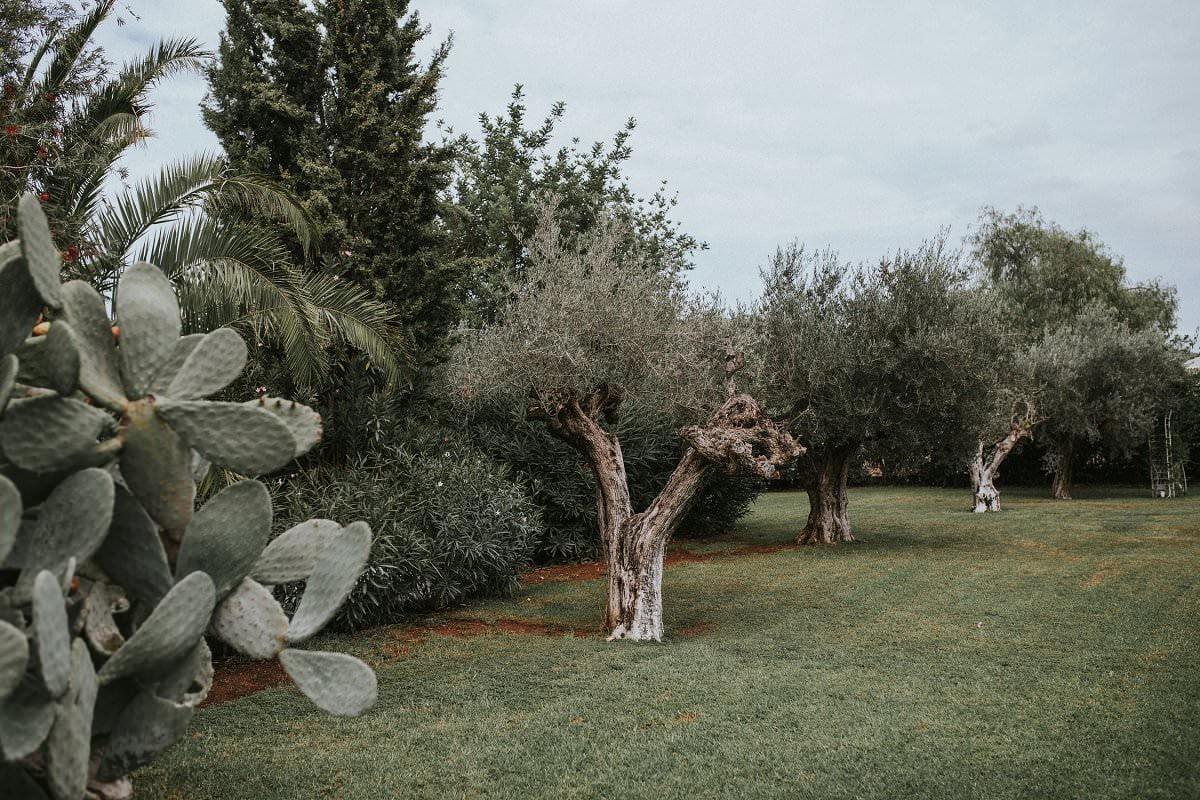 atzaro wedding ibiza gardens
