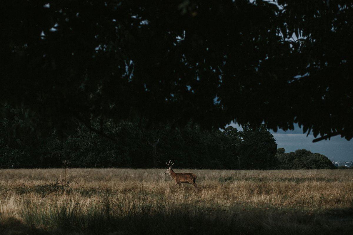 richmond deer park