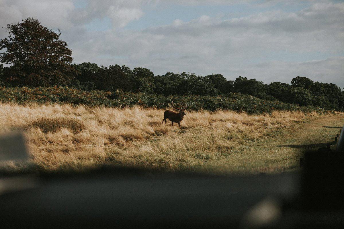 richmond deer park london