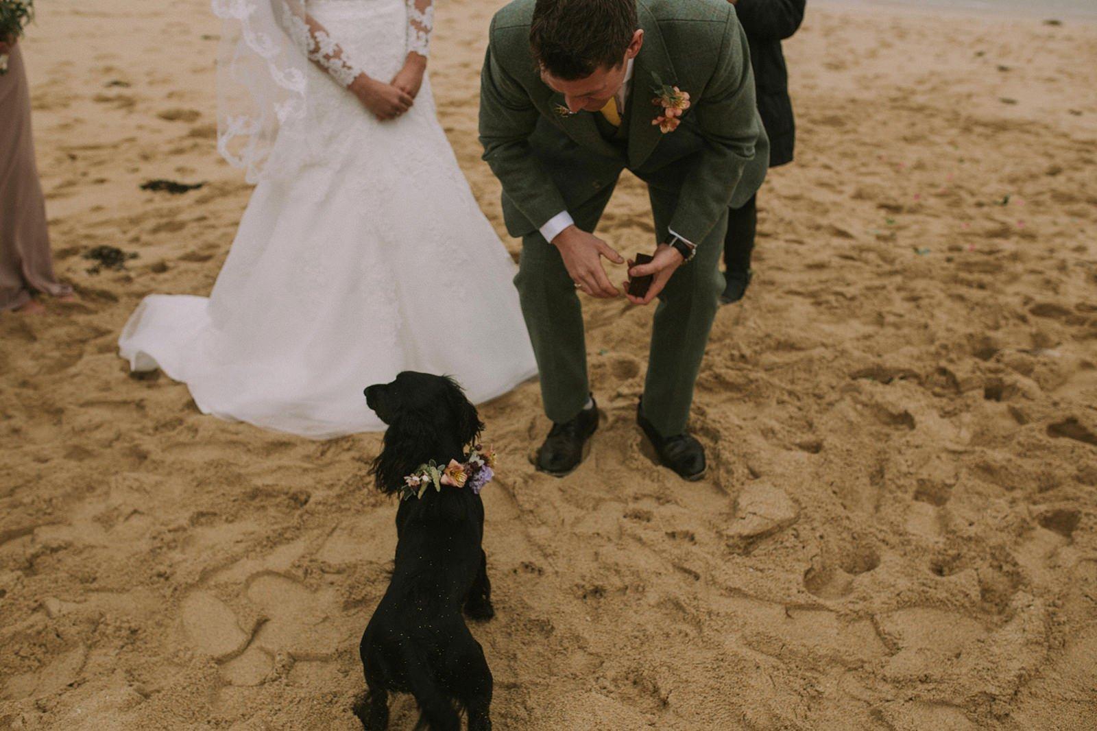 ringbearer dog wedding photo